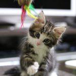 猫を飼い始めて家族生活に起こった10の変化。子供への影響は?